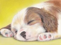 pastel painting of cavalier