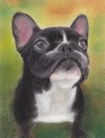 pastel painting of french bulldog