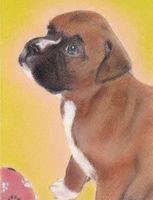 pastel painting of boxer puppy