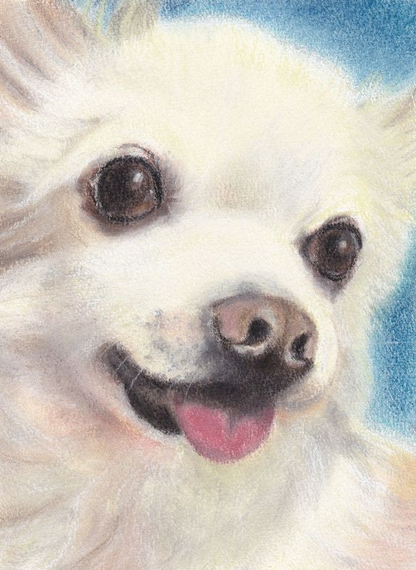 pastel portrait of chihuahua