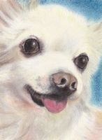 pastel painting of chihuahua